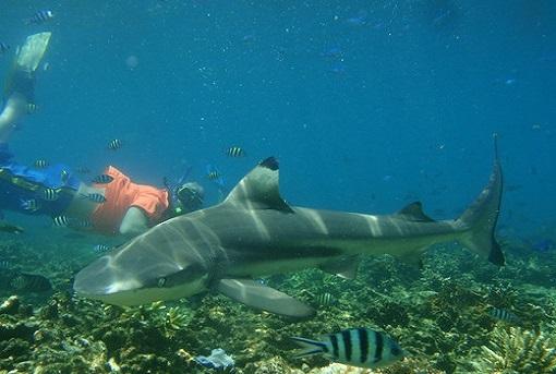 6. Pulau Kapas (Blog).jpg