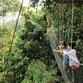 Malasia Viajes | Canopy
