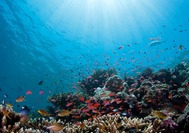 Malasia-Viajes-Fondo-Submarino-Sabah.jpg