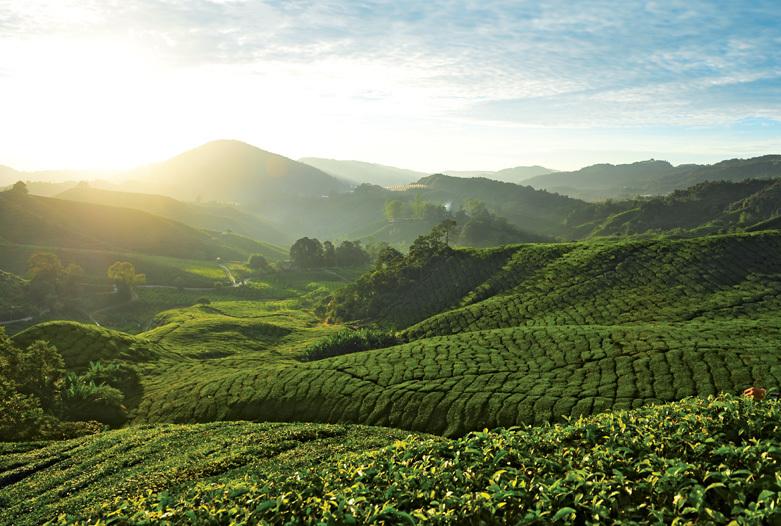 Viaje a Malasia | Cameron Highlands Plantaciones