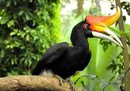 Malasia Viajes | Hornbill