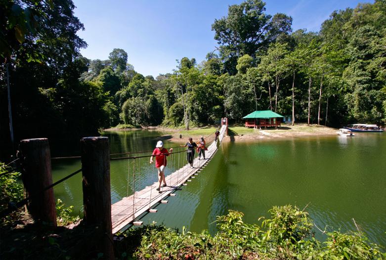 Malasia Viajes   Puente, Royal Belum Rainforest