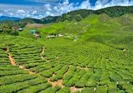 Malasia Viajes | Cameron Highlands Plantaciones