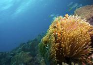 Viaje a Malasia | Mundo submarino de Tioman Island