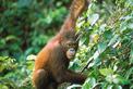 Viajes a Malasia | Orang Utan, Borneo