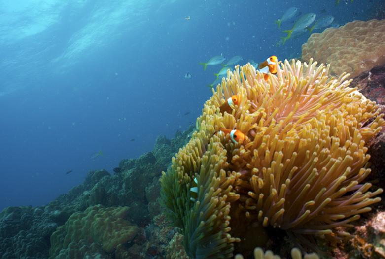 Viaje a Malasia | Buceo, Tioman Island
