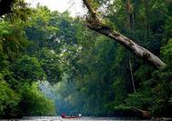 Malasia Viajes | Taman Negara